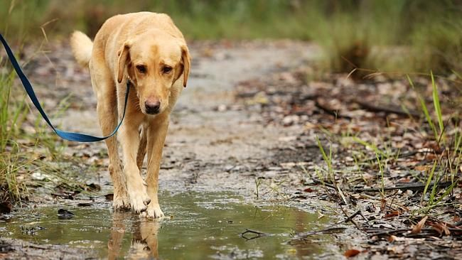 Brisbane's best dog-friendly walking and hiking trails // #DogFriendlyBrisbane