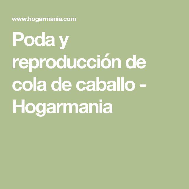 Poda y reproducción de cola de caballo - Hogarmania