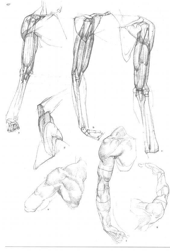 19 besten Anatomie Bilder auf Pinterest | Menschliche anatomie ...