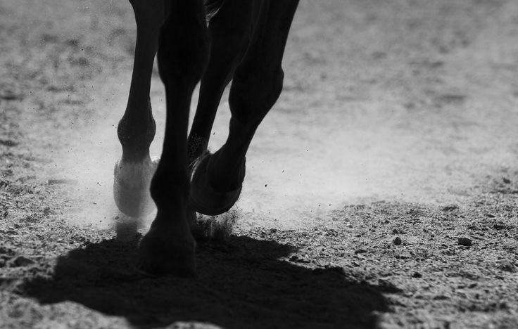 Photographer Pernille Westh | Horse · Get my 7 FREE basic photography tips - you need to know! http://pw5383.wixsite.com/free-photo-tips