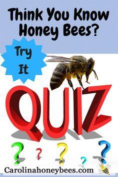 A honey bee quiz for new beekeepers. Carolina Honeybees