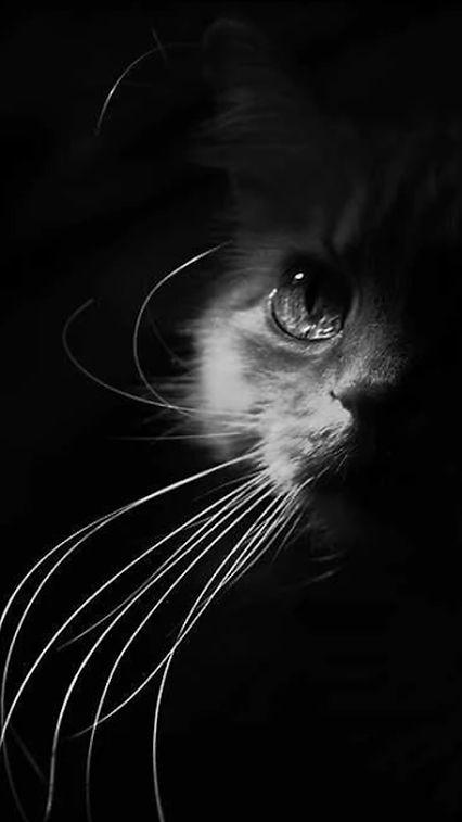 Gatito misterioso