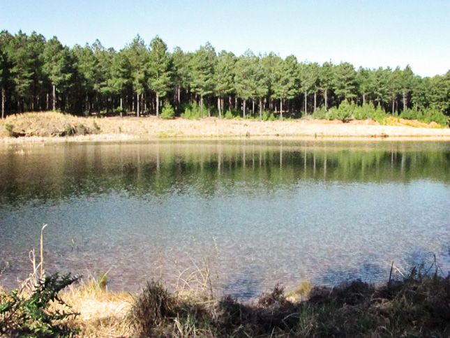 Picnic at the dam. Ingeli Forest Lodge.