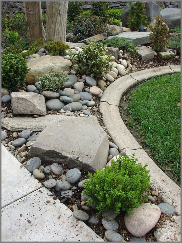 junipers holly boxwood and boxleaf euonymous give this river rock beach pebble and boulder rock garden a rugged and sturdy design feel gardening dreams