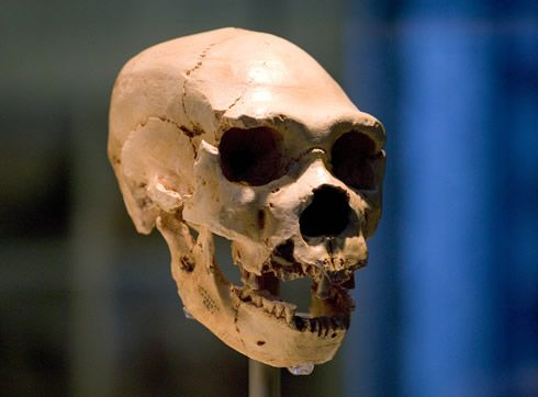 a new understanding of neanderthals The child, the team argued, was clearly a human-neanderthal hybrid he had   this interpretation was – and still is – controversial while the.