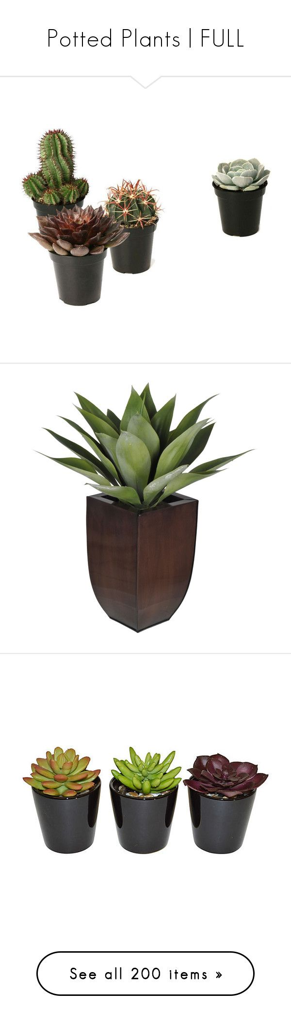 """Potted Plants 