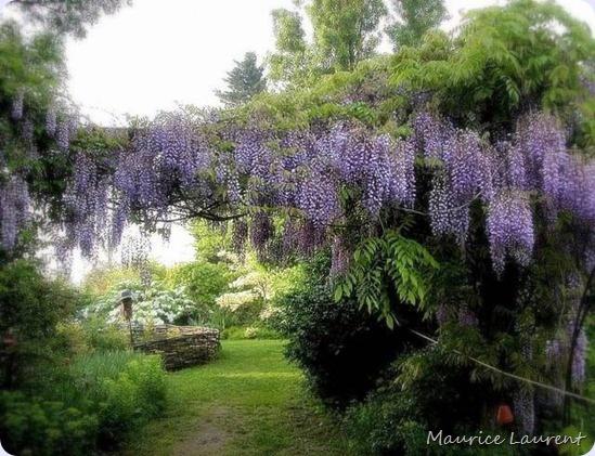Gardens: Gardens Flor, Favorite Flowers, Gardens Wisteria, Gardens Landscape, Climbing Vines, Gardens S, Wisteria Gardens, Gardens Outdoors, Wisteria Trees