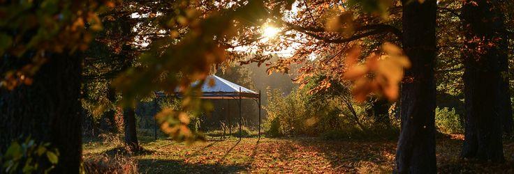 Schlossgut Oberambach - Biohotel und Kraftort am Starnberger See.   Ein Sonnenuntergang im Wald kann hier fast magisch wirken!