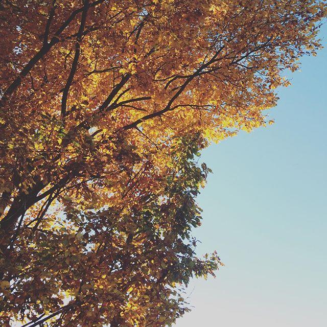 #goodmorning #monday #goodstart #fall #november #instagood #potd #autumn
