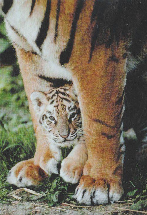 un bébé avec sa maman