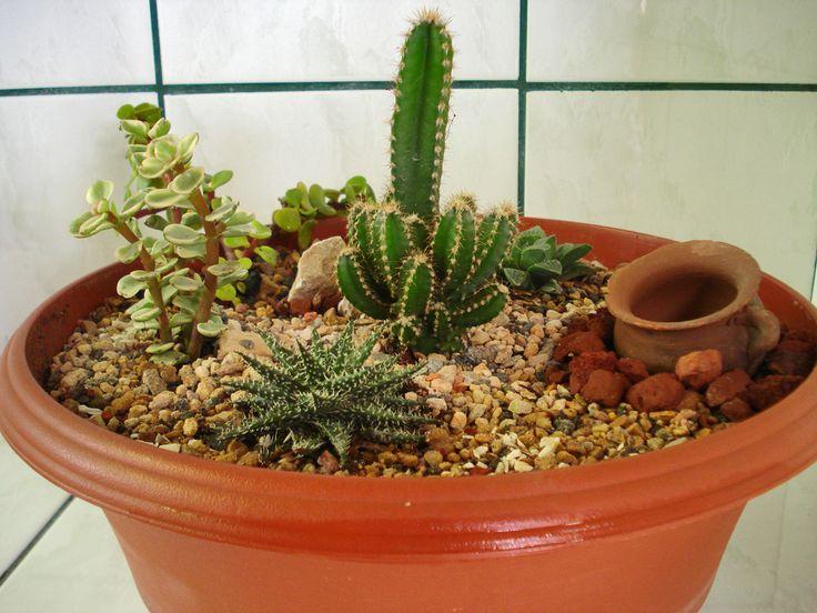 mi mini jardin de cactus ! =P