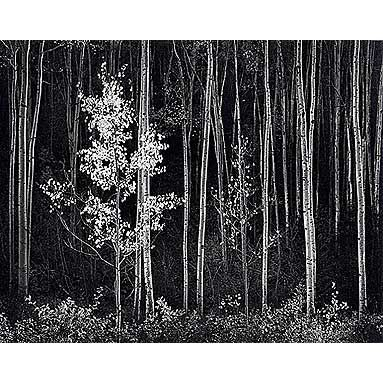 from the master Ansel Adams