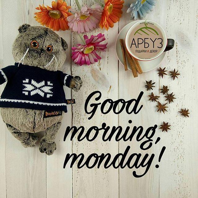 Доброе утро, друзья! ☕ С первым снегом ❄ и началом новой недели одевайтесь теплее чтобы не мерзнуть и не болеть Кот Басик в свитере (22см) 1600₽ Магазин подарков и декора Арбуз #первыйснег #осень #утродобрымбывает #goodmorning #хорошегодня #хорошегонастроения #basik #басик #подарочки #подарки #декор #арбуз #arbuzgift