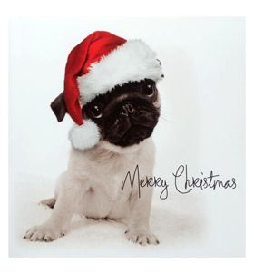 Pug puppy Christmas card at www.ilovepugs.co.uk post worldwide