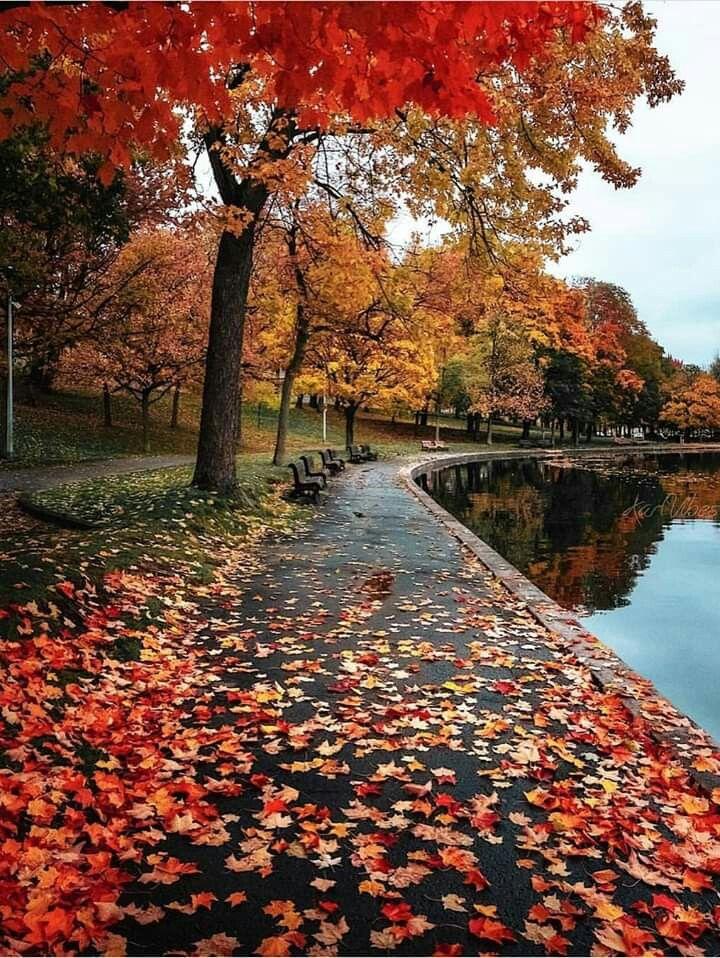 Autumn mosaic – Adem Berke