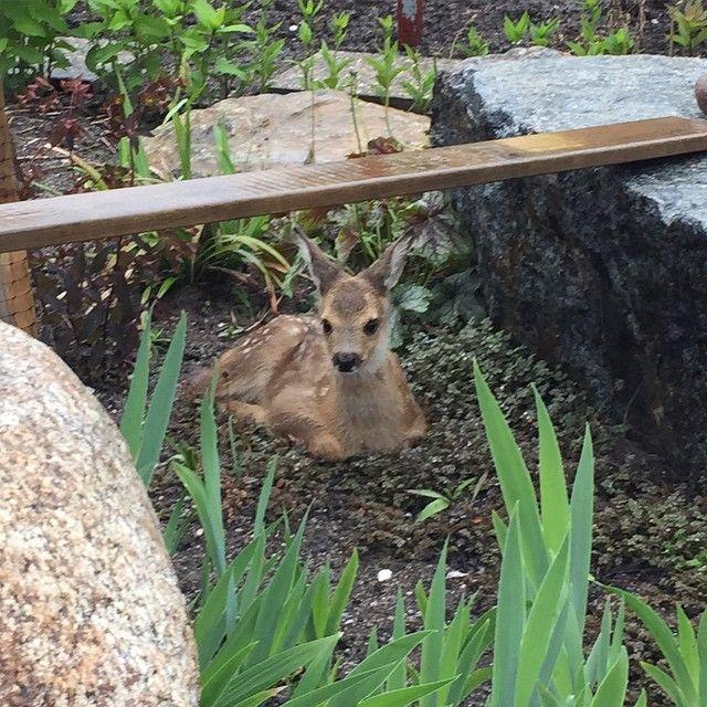 Bambi och taggpimpinell - Gulligt odjur i trädgården.