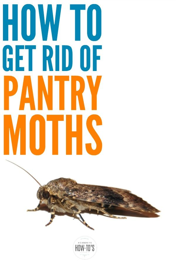 87cae3779e63b1277a67fdbe67531245 - How To Get Rid Of Pantry Moths And Larvae