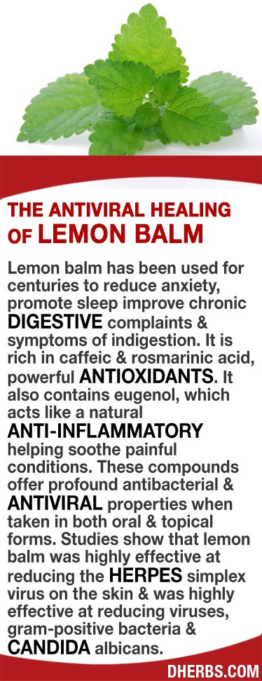 Lemon balm has been used for centuries to reduce anxiety, promote sleep improve chronic digestive complaints & symptoms of indigestion. Rich in caffeic & rosmarinic acid, powerful antioxidants, eugenol acts like a natural anti-inflammatory soothing painful conditions that offer profound antibacterial & antiviral properties in both oral & topical forms. Studies show lemon balm is highly effective at reducing herpes simplex virus on the skin & reducing viruses, gram-positive bacteria…