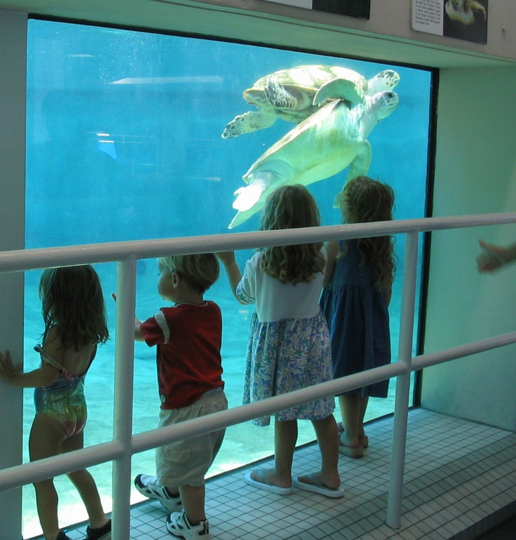 78 Best Images About Texas Zoos And Aquariums On Pinterest