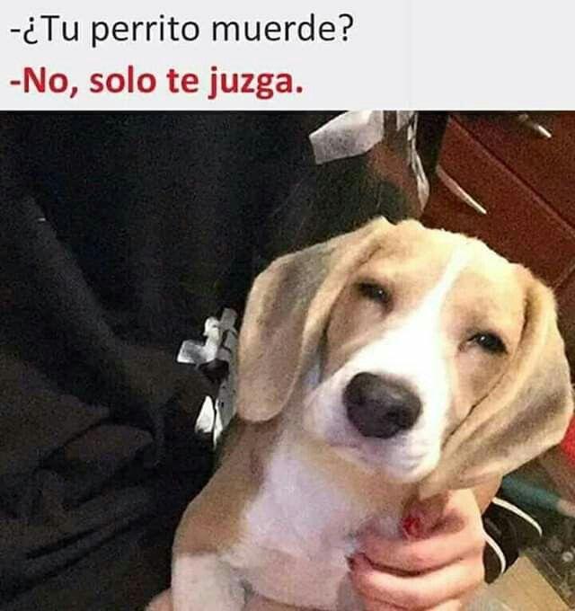 Pin De Marilyn En Memes Perros Perrito Animales
