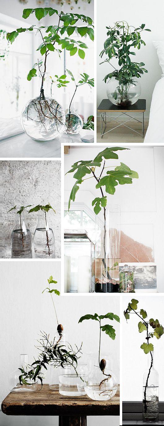 Trend Alert: Rotade växter i glasvas