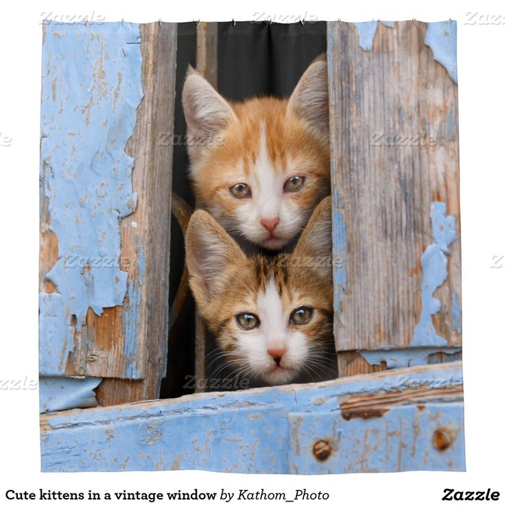 Cute kittens in a vintage window