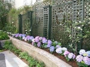 san francisco backyard garden topiaries hydrangeas - - Yahoo Image Search Results