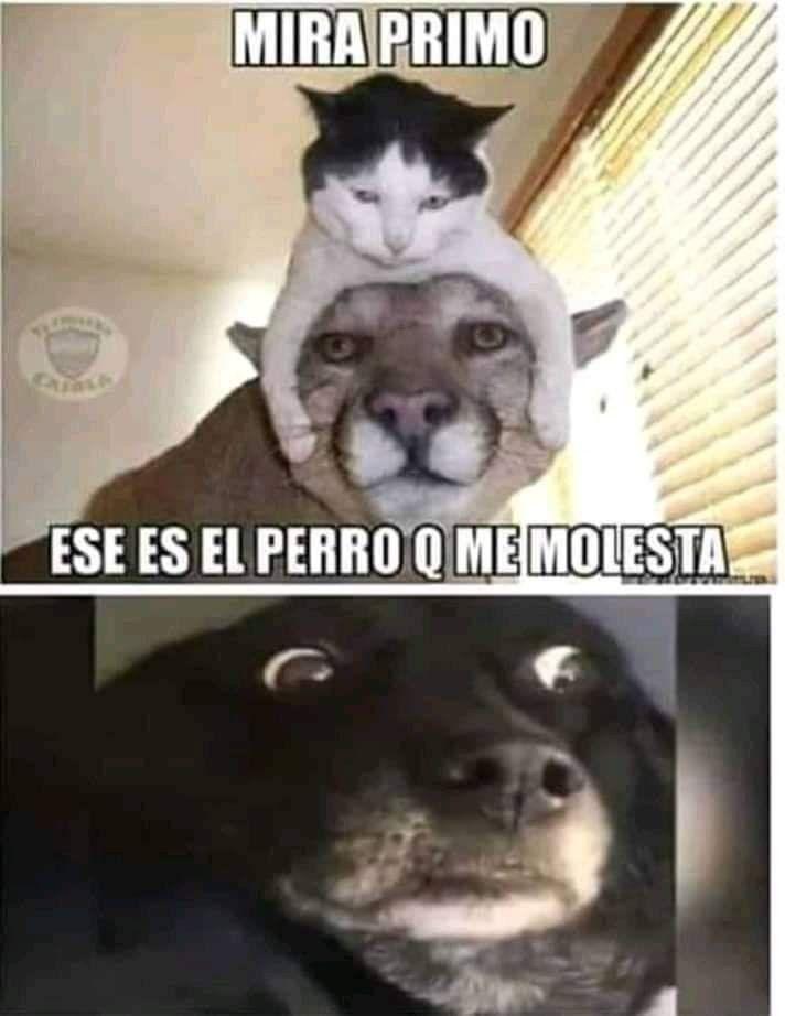 Pin De Yessy Maa En Cosas Que Dan Risa Memes Divertidos Meme Gracioso Meme Gato