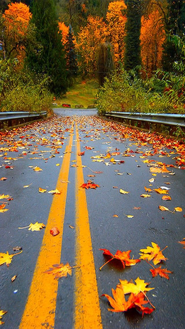 Forest Autumn Road Peaceful Great Walk Path Amazing Forest Orange