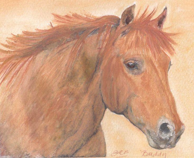 """""""Buddy' - Milla's pony, part Shetland."""
