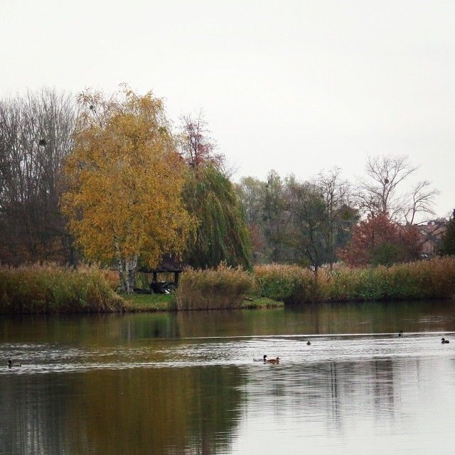 Csak egy lépésre van a fürdőtől a Csónakázó tó.  #nature #wellness #lake #tree Sárvár