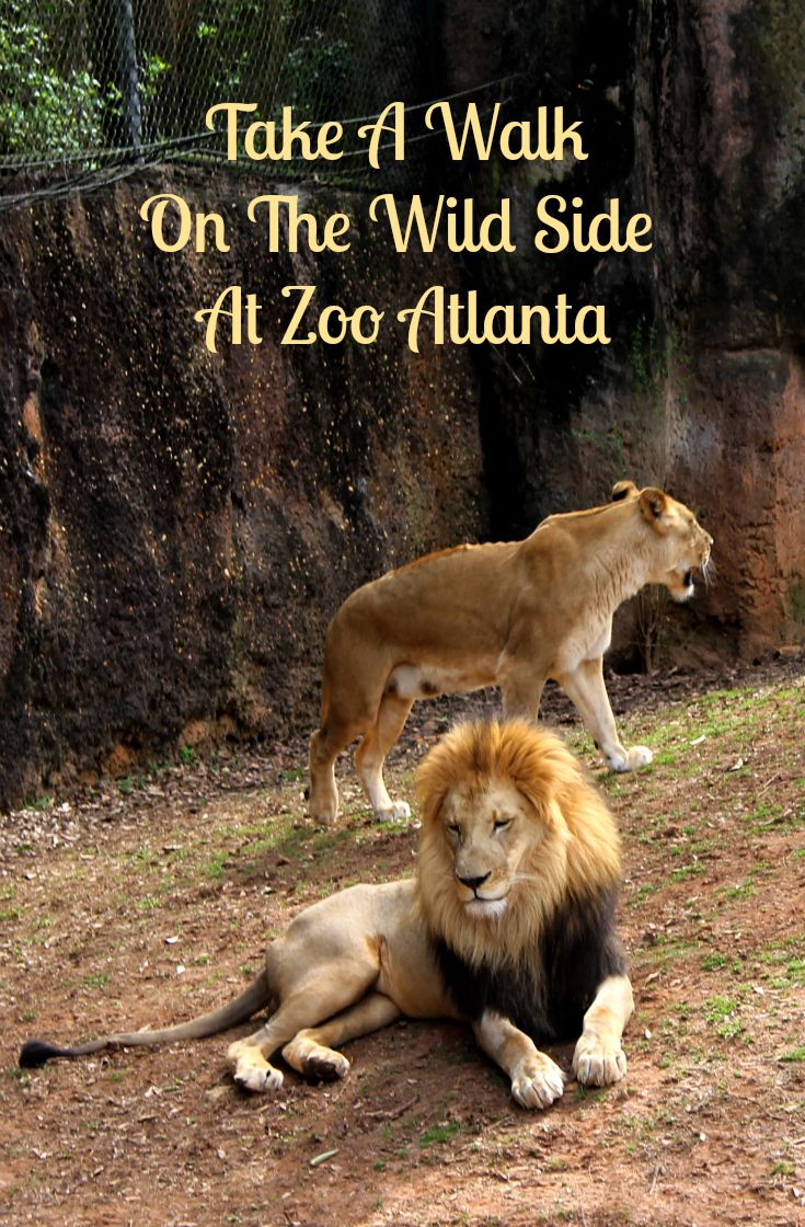 Atlanta zoo coupons