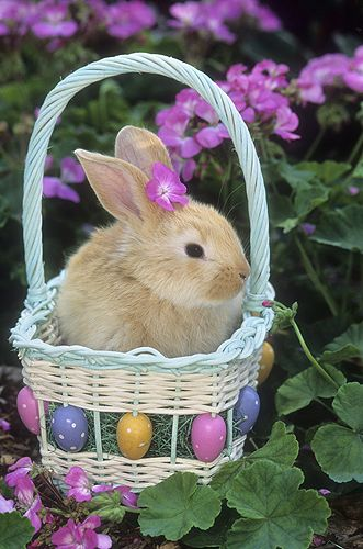 Bunny in an Easter Basket. One year Hubby gave me a bunny for Easter, the same colour as this one also.