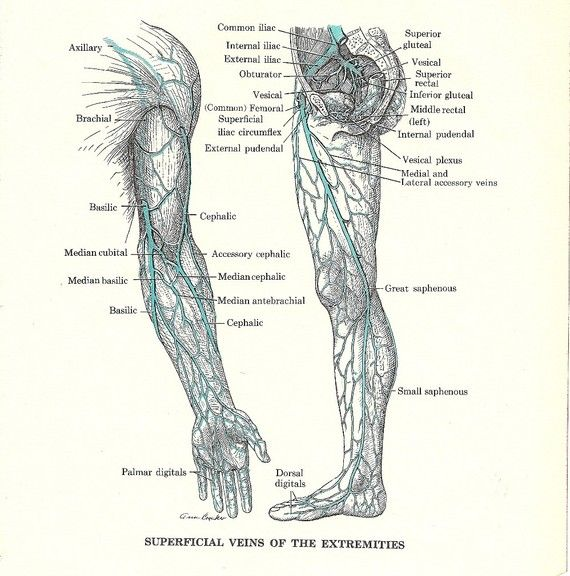 Vintage Anatomy Illustration - Veins of the Arm and Leg -  for Framing, Collage, Scrapbooking, Paper Arts, Mixed Media and MORE via Etsy