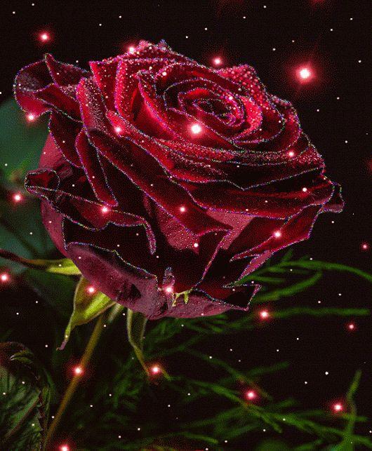 почему картинки на телефон красивые цветы розы блестящие ступни