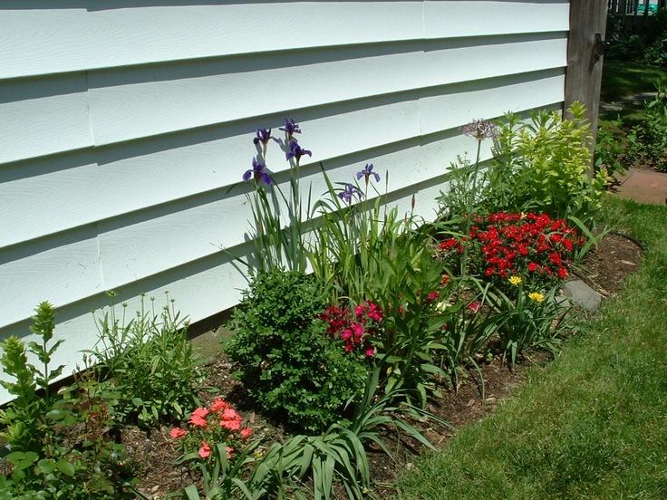 Carnations in my garden in Dayton Ohio.