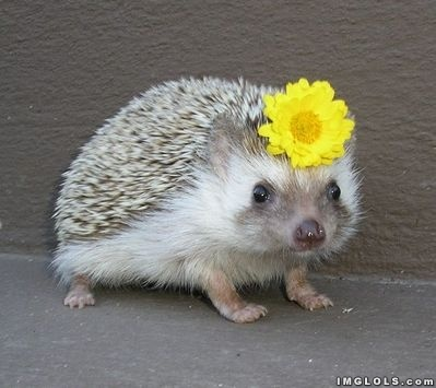 hedgehog with a flower funny picture lol meme