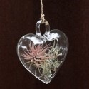 Tiny glass heart beats with life inside....$25Holiday Wreaths, Flora Grubb, Christmas Decorations, Living Plants, Heart Shape, Air Plants, Grubb Gardens, Floragrubb, Heart Shapped