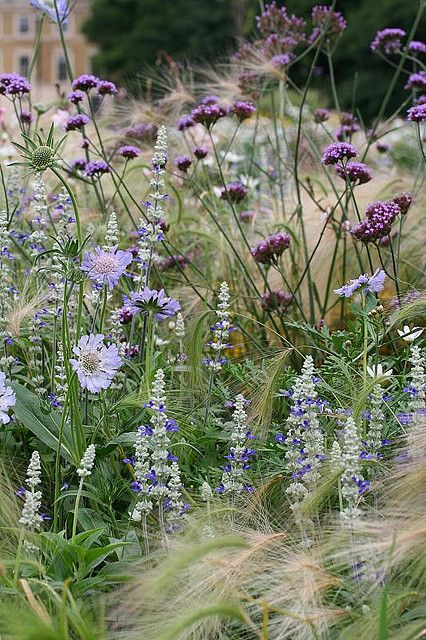 Verbena bonariensis and salvia make up this pastel blue and purple delight