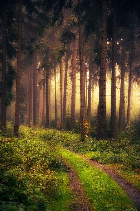 Mystic-forest-in-Vogtland-Saxony-Germany