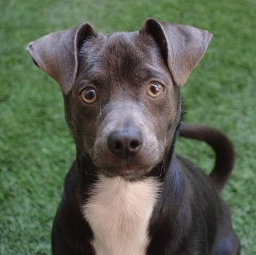 Hi There My Name Is Eric I M A 10 Month Old Neutered Male Chihuahua When We First Meet I May Be A Bit Shy I Can Get A Little Dogs Humane