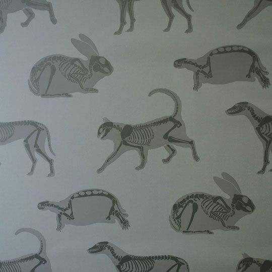X-ray animal wallpaper. This would be so cool around my desk