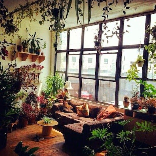 Inside House Plants, Room With