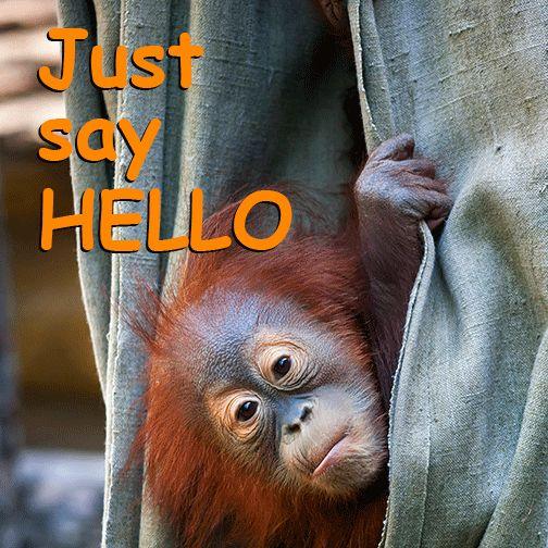 """""""Să-i învățăm pe copii să devină cetățeni ai lumii și să pună accent pe valori precum compasiunea și dăruirea, aceasta este misiunea noastră educațională"""", spune Doron. #hellomyworld #orangutan #rainforests #forests #saveorangutan #saveorangutans #palmoil"""
