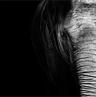 .Elephant Photos, Nicolas Evarist, Dark Zoos, Nature, Black White Photography, Animal Photography, Black And White, Beautiful, Art