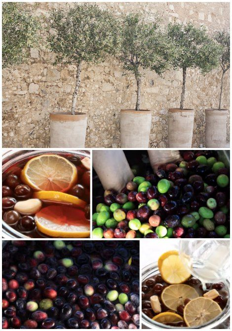 Growing food in a garden is not always possible and means another option is needed. One idea you can use is learn how to grow an olive tree in a container.