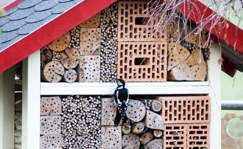 Ein Insektenhotel für Nützlinge -  Mit einem Insektenhotel können Sie nützlichen Insekten und auch den Pflanzen Ihrem Garten etwas Gutes tun. Indem Sie Wildbiene, Florfliege und Co. ein geeignetes Quartier zu Verfügung stellen, fördern Sie die Bestäubung Ihrer Obstbäume und halten gleichzeitig Blattläuse und andere Schädlinge in Schach.