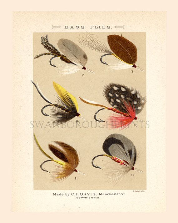 1000 ideas about fly fishing for bass on pinterest bass for Fly fishing decor