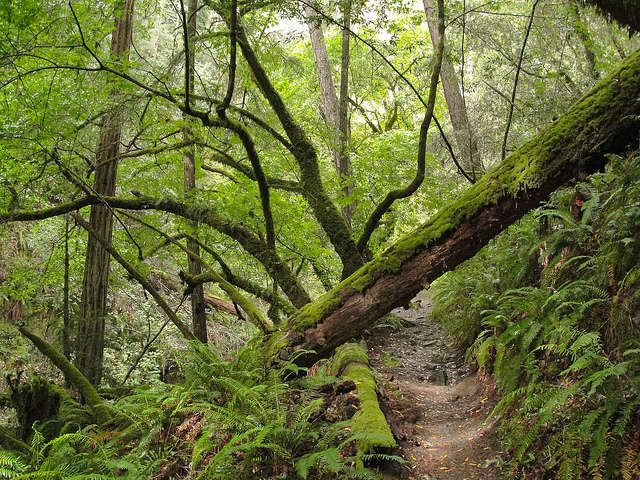 The top reasons why you should visit Muir Woods National Monument