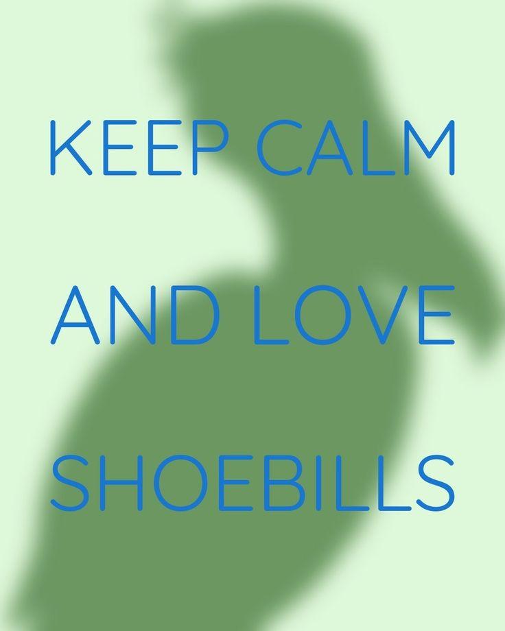 Love shoebills pinterest for Fenetre 1 3 2 3